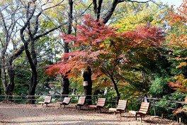 都立戸山公園の紅葉