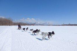 大雪原を勢いよく駆け巡る犬ぞりは爽快感が味わえることで人気