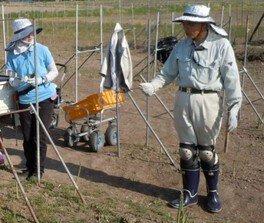 農業体験in山形県川西町「アスパラガス収穫体験」