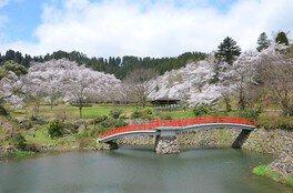 城山公園の桜(富山県)