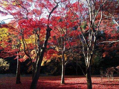 偕楽園の紅葉