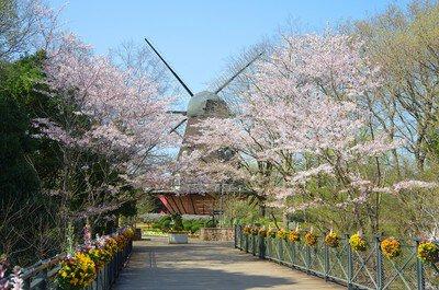 ふなばしアンデルセン公園の桜