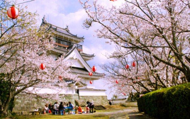 【桜・見ごろ】妙見山