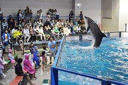 わやぬれ祭り!イルカのスプラッシュ