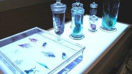 ワークショップ教室「新世界 透明標本の不思議を知ろう!」