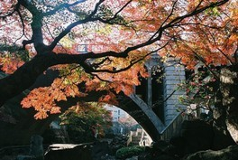 音無親水公園の紅葉