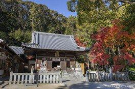 松平郷の紅葉