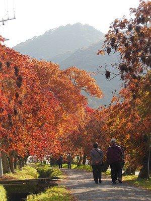柳坂ハゼ祭りの紅葉