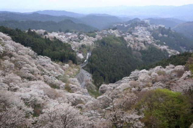 吉野山 桜まつり
