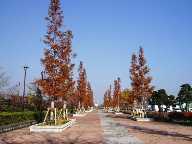 都立舎人公園の紅葉