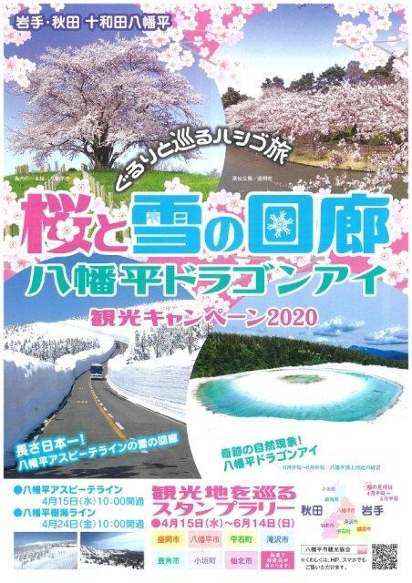 桜と雪の回廊・八幡平ドラゴンアイ 観光キャンペーン2020