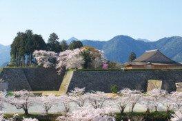 篠山城跡・王地山公園の桜