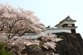 臼杵城址の桜