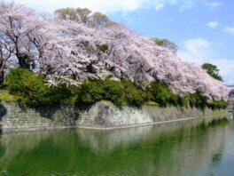 駿府城公園の桜