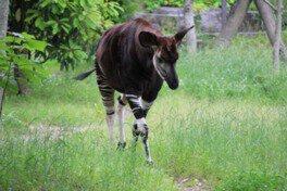 【臨時休園】よこはま動物園ズーラシア