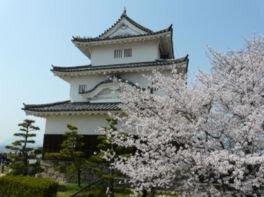 丸亀城と共に咲き誇る桜