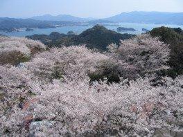 大山公園の桜(長崎県)