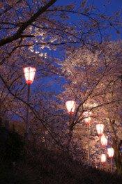 とけん山公園の桜