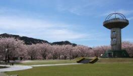 十王パノラマ公園の桜