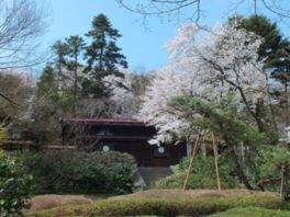 富山市民俗民芸村の桜