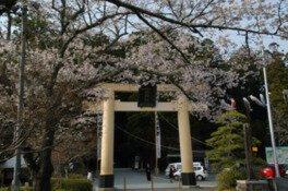 小国神社の桜
