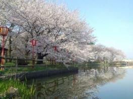 弁天潟風致公園の桜