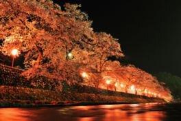 美甘宿場桜