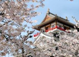 清洲城周辺の桜