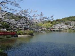 定光寺公園の桜