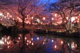 大山緑地の桜