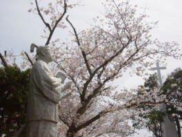 原城跡の桜