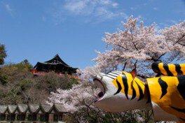 信貴山 朝護孫子寺の桜