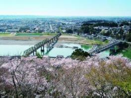 鳥羽山公園の桜