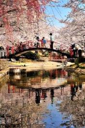 朝日山森林公園の桜