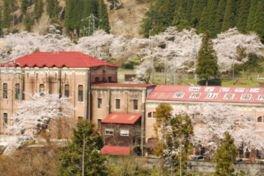 イビデン東横山発電所の桜並木
