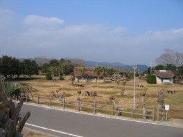 さんさん富江キャンプ村
