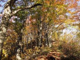 櫛形山脈の紅葉