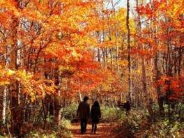 八千穂高原自然園の紅葉