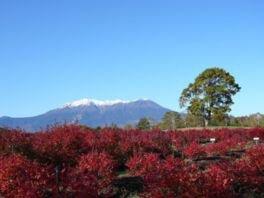 開田高原の紅葉
