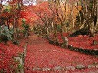 鶏足寺(旧飯福寺)の紅葉(滋賀県・長浜市)