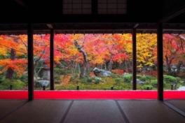 洛北(圓光寺)の紅葉