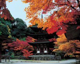 湖東三山 西明寺の紅葉