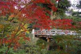 尾張徳川家の雄大な庭園を紅葉を見ながら散策しよう