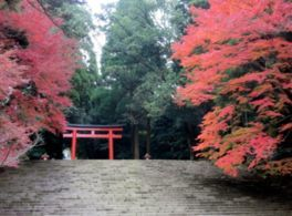 霧島(霧島神宮)の紅葉