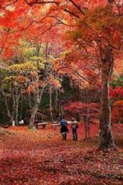 府立笠置山自然公園の紅葉