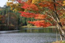 段戸裏谷原生林 きららの森の紅葉