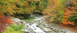 渓流を赤、黄、緑といった様々な色彩が彩る
