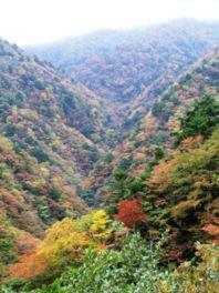 高野龍神スカイライン(国道371号線)(五百原渓谷)の紅葉