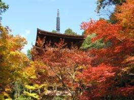 湖東三山 金剛輪寺の紅葉