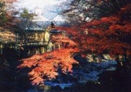 修善寺温泉「竹林の小径」と「修禅寺」の紅葉